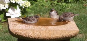 Waterbeeld met mussen-