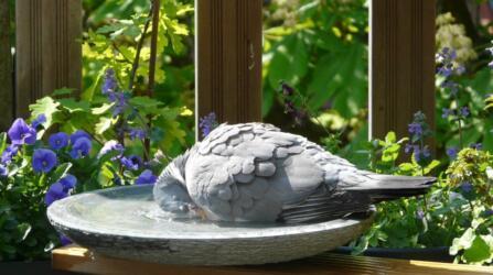 birdbath met duif 2